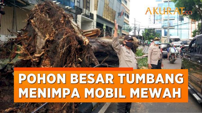 Hujan Angin, Pohon Besar Di Kebayoran Lama Tumbang Menimpa Mobil Mewah