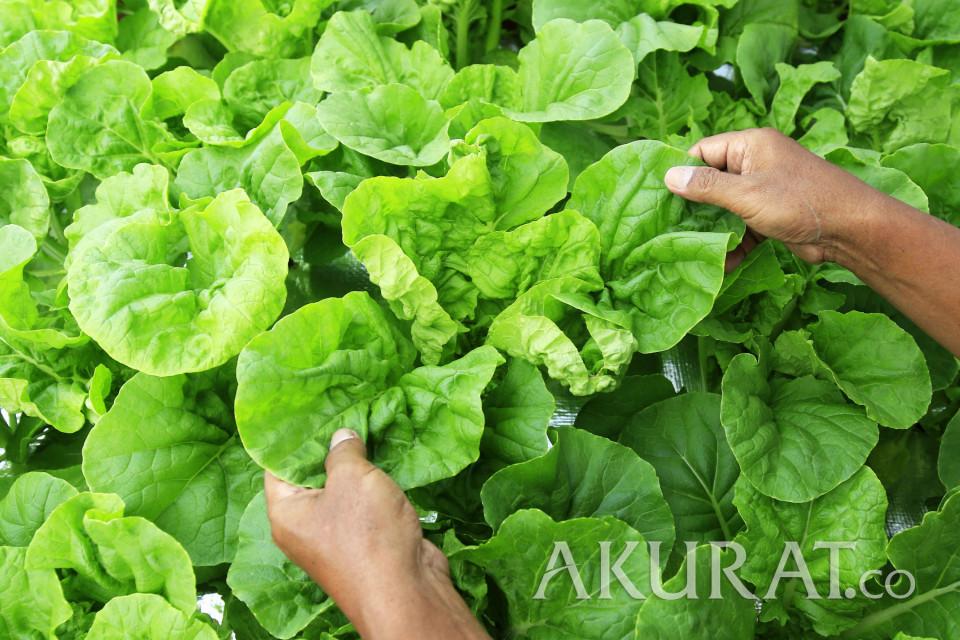 Mau Mulai Cari Duit dari Bisnis Urban Farming? Simak Caranya!