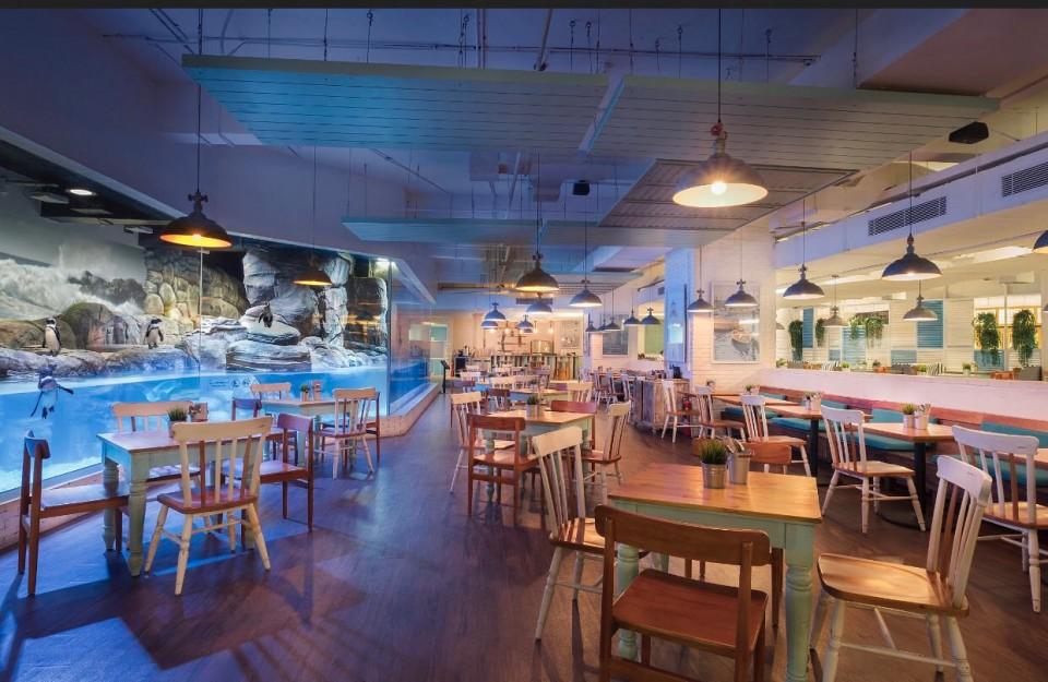 Makan di Restoran Ini akan Ditemani Pinguin - Foto 1