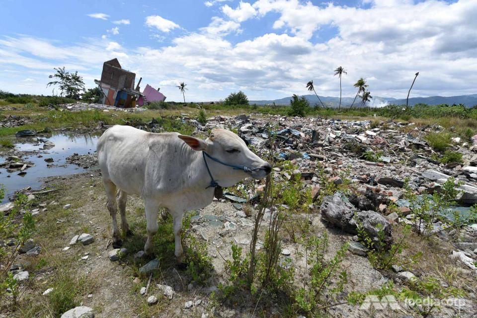 Setahun Usai Gempa dan Tsunami Palu, Media Asing Soroti Penanganan Para Korban - Foto 1