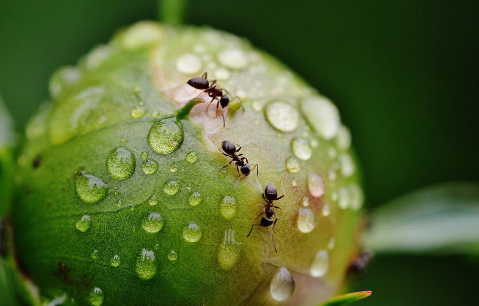 Kisah Nabi Sulaiman dan Pasukan Semut yang Takut Terinjak