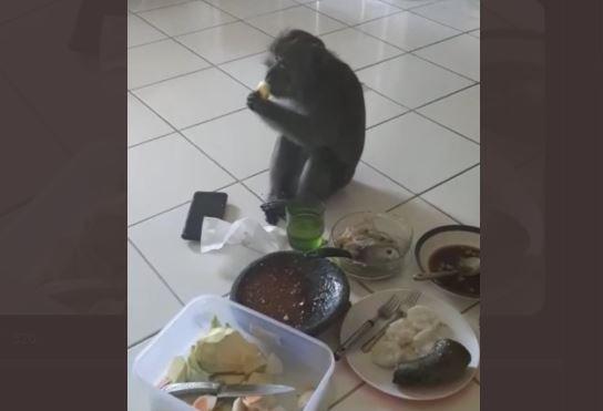 Monyet ini Tiba-tiba Masuk Rumah dan Ikut Rujakan, Bikin Kaget!