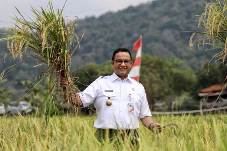 5 Potret Gubernur Anies Baswedan Panen Hasil Tani Bareng Bupati Sumedang, Seru - Foto 2