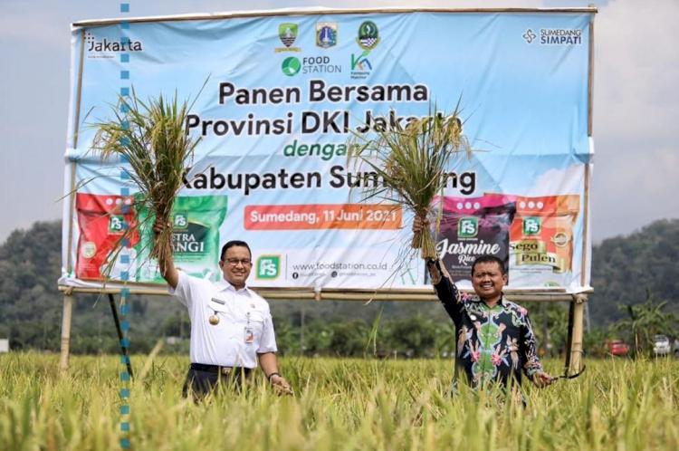 5 Potret Gubernur Anies Baswedan Panen Hasil Tani Bareng Bupati Sumedang, Seru - Foto 3