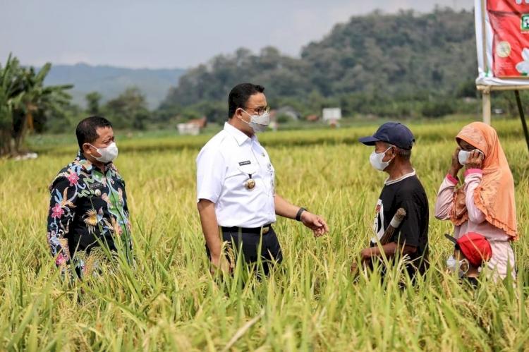5 Potret Gubernur Anies Baswedan Panen Hasil Tani Bareng Bupati Sumedang, Seru - Foto 4