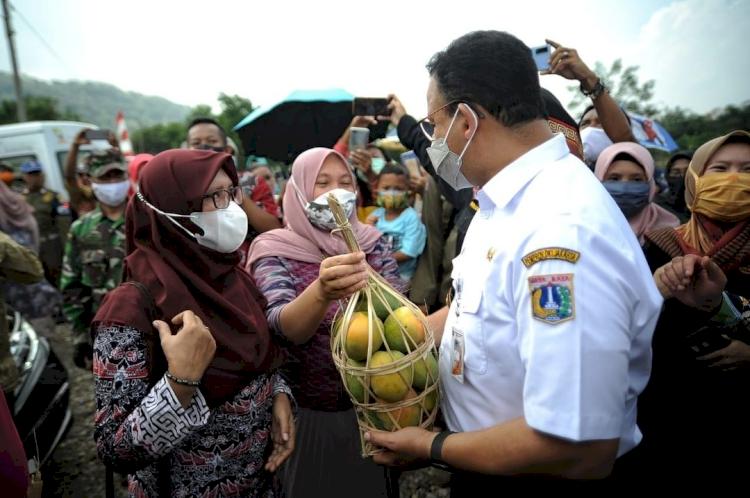 5 Potret Gubernur Anies Baswedan Panen Hasil Tani Bareng Bupati Sumedang, Seru - Foto 5
