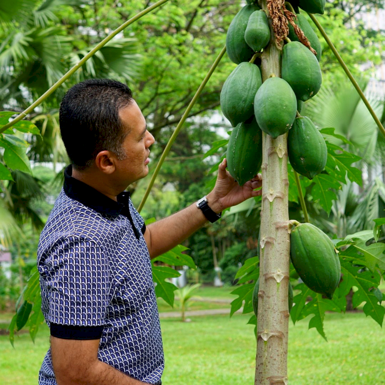 Hobi Bercocok Tanam, 7 Potret Wakil Gubernur Sumut Musa Rajekshah Berkebun - Foto 2