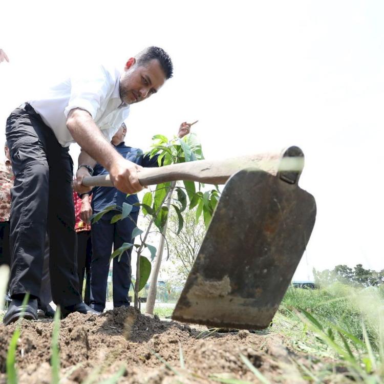 Hobi Bercocok Tanam, 7 Potret Wakil Gubernur Sumut Musa Rajekshah Berkebun - Foto 6