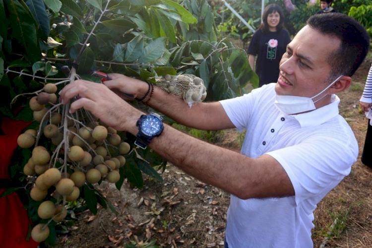 Hobi Bercocok Tanam, 7 Potret Wakil Gubernur Sumut Musa Rajekshah Berkebun - Foto 7