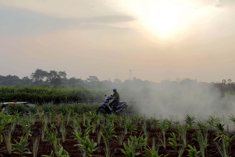 Pemerintah Dorong Pembenahan Kelembagaan Petani Demi Ketahanan Pangan