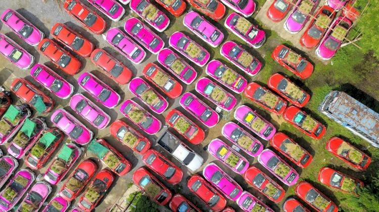 Super Kreatif di Masa Pandemi 7 Potret Unik Berkebun di Atap Mobil Taksi - Foto 1
