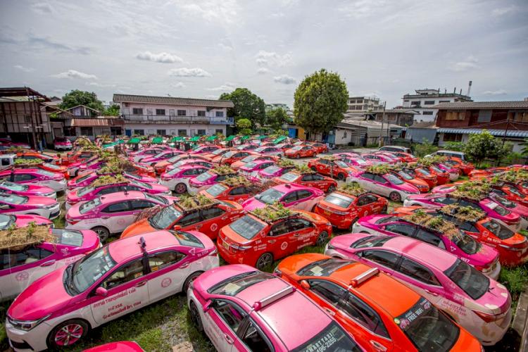 Super Kreatif di Masa Pandemi 7 Potret Unik Berkebun di Atap Mobil Taksi - Foto 2