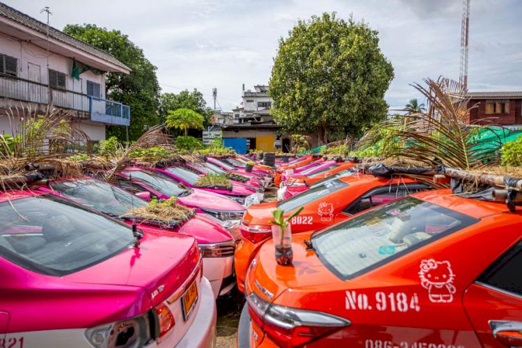 Super Kreatif di Masa Pandemi 7 Potret Unik Berkebun di Atap Mobil Taksi - Foto 3