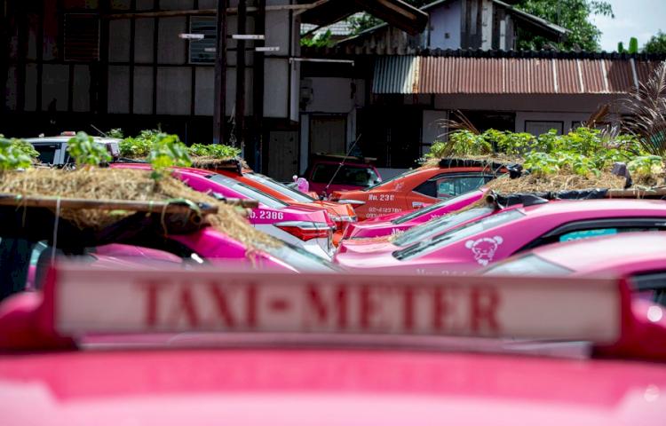 Super Kreatif di Masa Pandemi 7 Potret Unik Berkebun di Atap Mobil Taksi - Foto 4
