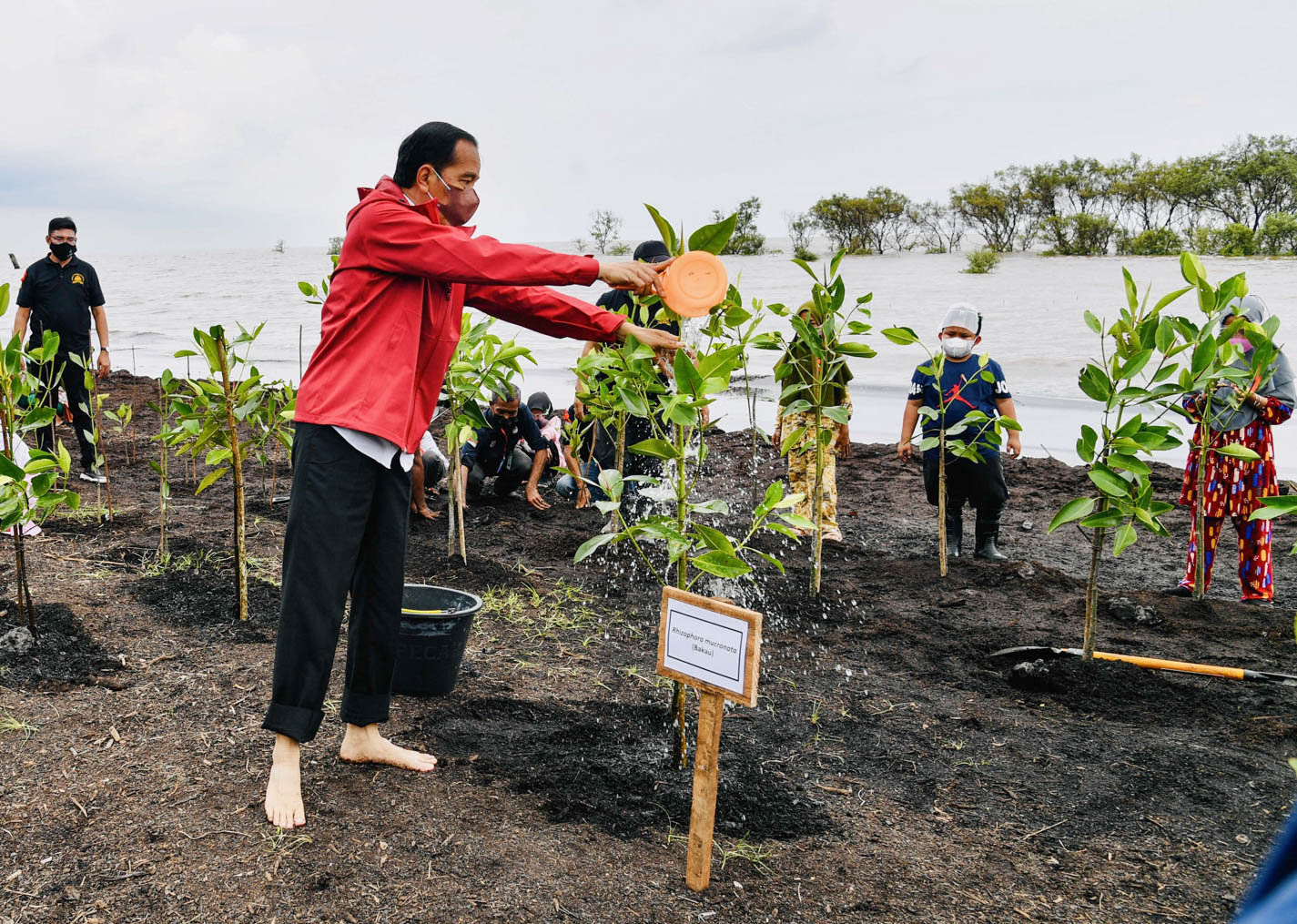 Presiden Jokowi Turun Langsung Tanam Mangrove Bersama Warga