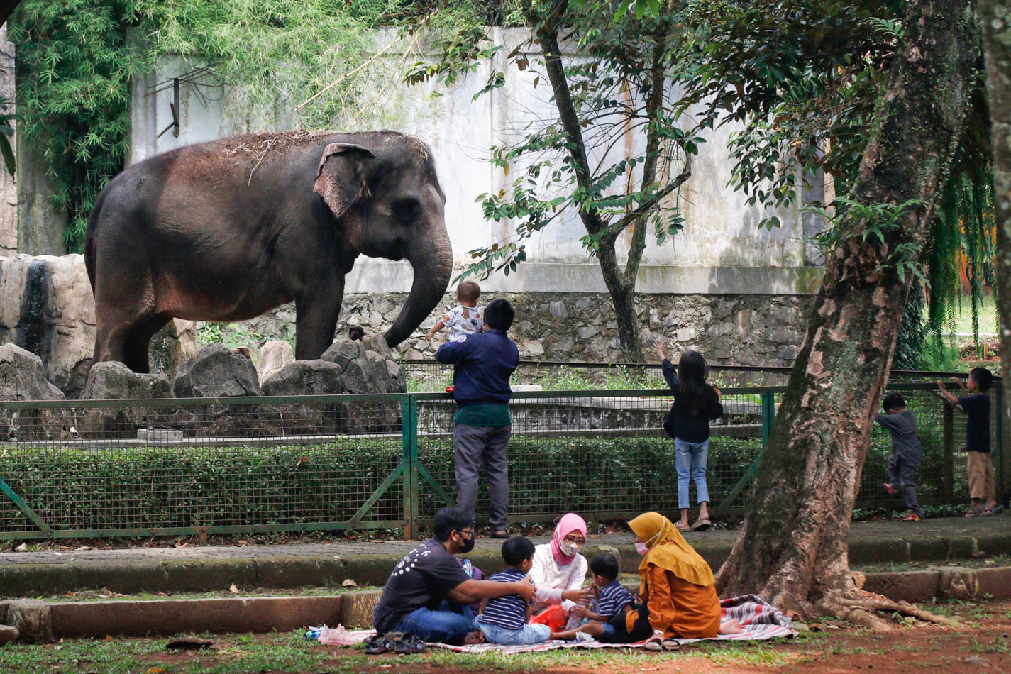 Taman Margasatwa Ragunan Kembali Dibuka untuk Warga Ber-KTP DKI Jakarta