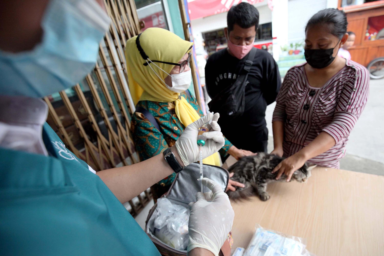 Targetkan Kota Jakarta Tanpa Rabies, Puluhan Kucing Divaksinasi