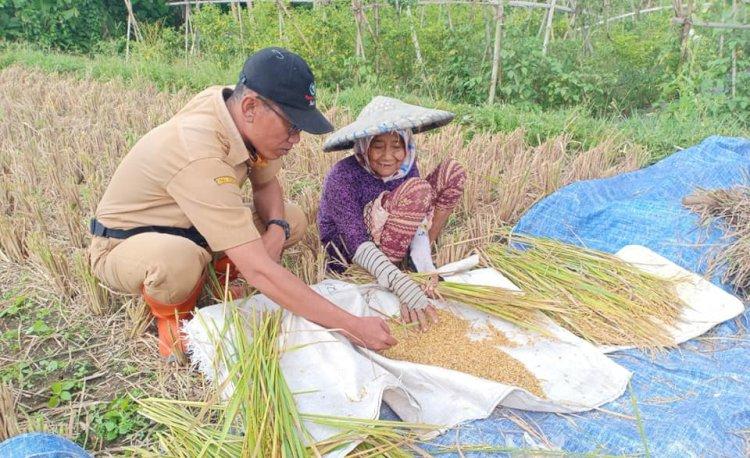 Jadi Agen Perubahan, Inilah Kiprah Penyuluh Pertanian di Sukabumi