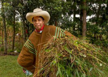 Dinobatkan Jadi Presiden Miskin Pertama Peru, 5 Fakta Menarik Pedro Castillo - Foto 1