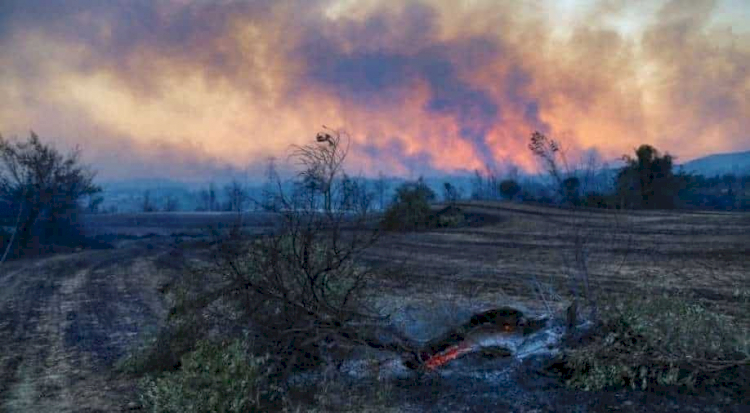 Turki Dilanda Kebakaran Hebat, 3 Tewas, Ratusan Luka-luka, Ribuan Domba Mati - Foto 5