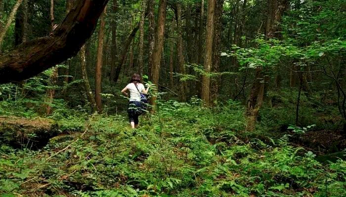 5 Tempat Paling Angker di Jepang, Ada yang Jadi Gila usai Uji Nyali di Sana - Foto 1
