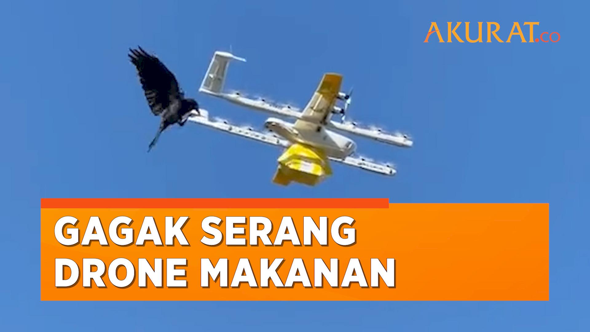 Dikira Musuh, Gagak Serang Drone Pengantar Makanan Di Australia