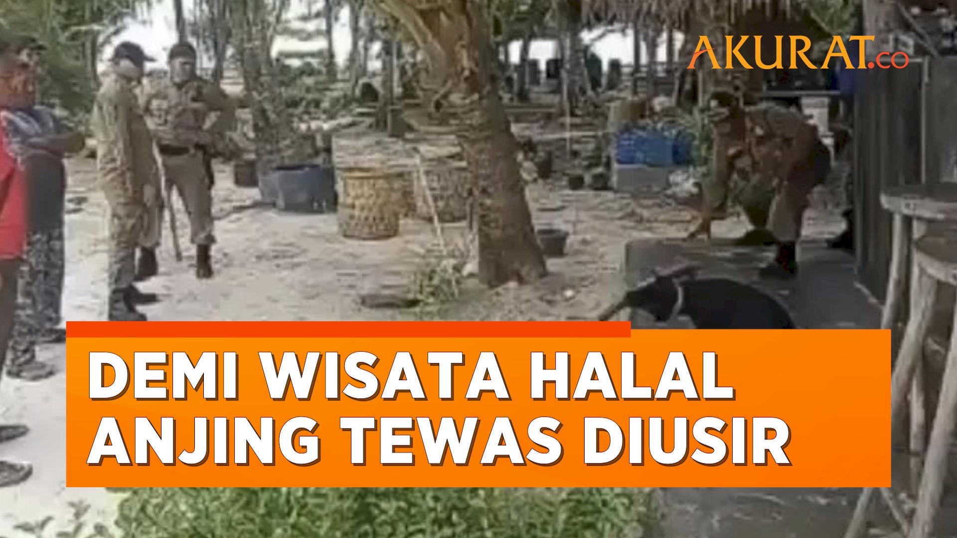 Demi Kawasan Wisata Halal, Seekor Anjing Diusir Aparat Hingga Tewas